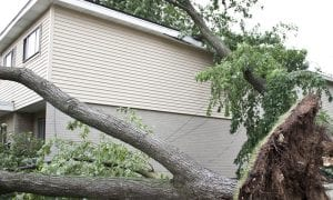 Is Tree Damage to my Roof Covered by Insurance?